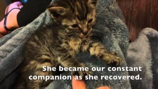 Enya चमत्कार बिल्ली का बच्चा