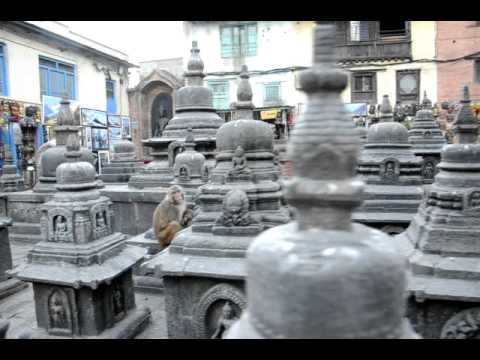 Monkeys living at Monkey Temple, Kathmandu