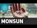 monsun/