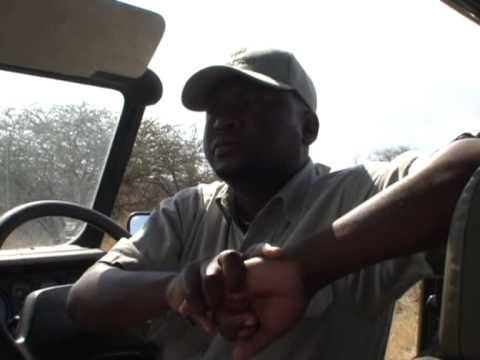 Lew na droze w Parku Krugera 2/2