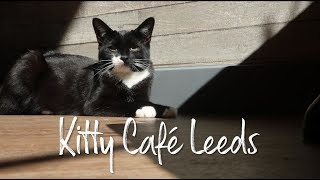 Kitty Cafe Leeds!