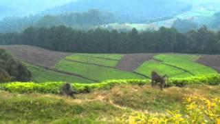 Zen moment: Baboons chillaxing in Rwanda
