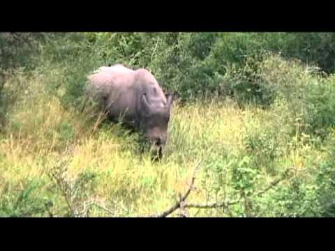 Travel – Mar 2010 – Rhinoceros in Kruger National Park in So. Africa  – Carl W. Farley
