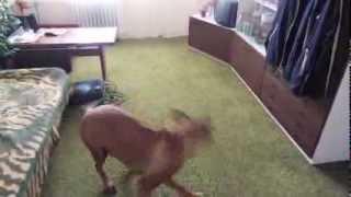 můj miláček snoop doggy dog