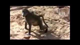 เพลง สัตว์โลกผู้น่ารัก ขับร้องโดย ยัยแจ๋ว (สมัครเล่น)