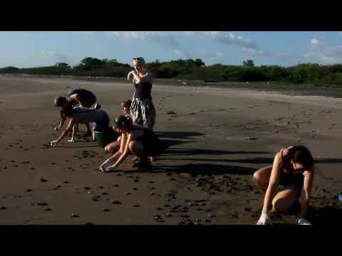 Greenpathways Tours – Releasing baby Sea Turtles