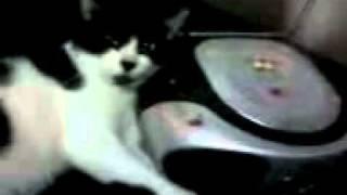 Meu gatinho ouvindo musica.
