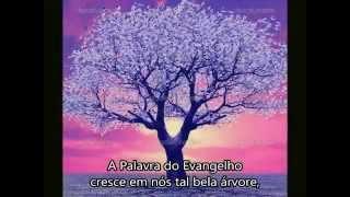 """MÚSICA CATÓLICA """" Árvore do Evangelho"""", de Tarcísio Mattos."""