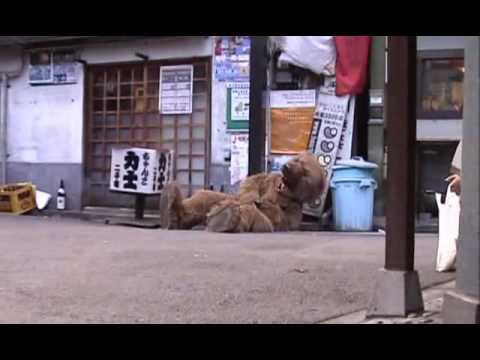 Animal de Ulfuls Letra y Video