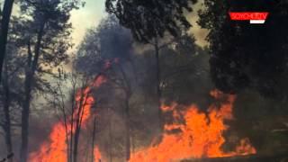 Conmemoran un año del incendio de China Muerta con plantación de araucarias