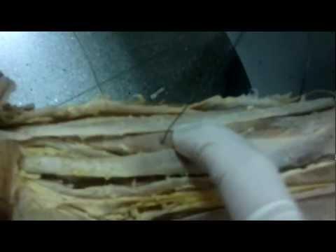 kadavra kol kası