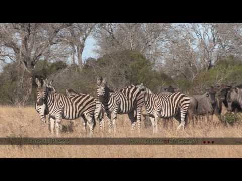 Manyeleti Game Reserve – South Africa Travel Channel 24
