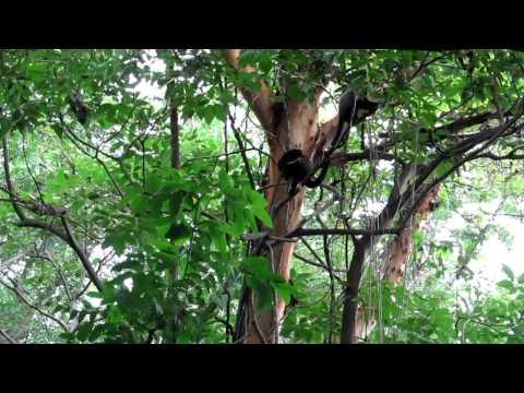 Charco Verde – Isla de Ometepe, Nicarauga