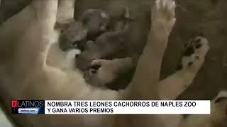 El Naples Zoo busca nombre para sus nuevas crías