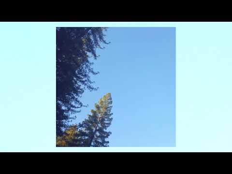 Patricia Taxxon - Cicada [Full Album]