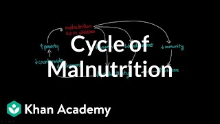 Cycle of Malnutrition