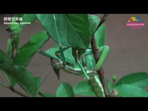 推「解開昆蟲密碼」特展-宣導生物多樣性保育 Exhibition:Revealing the Hidden Code of Insects - YouTube