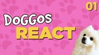 Doggos React