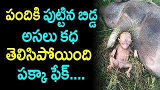 పందికి పుట్టిన బిడ్డ అసలు కథ తెలిసిపోయింది....పక్క ఫేక్ |pig deliver human like baby|suman tv