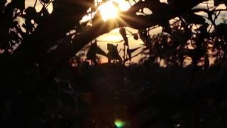 Bonobo : Second Sun (Music Video)