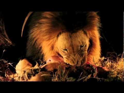 South Africa Vacation – Safari – 2 Lion Kills