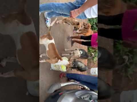 dog feeding goa