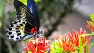 Danyel Gérard   Butterfly En francés