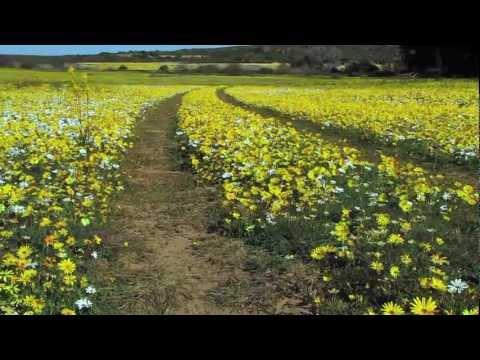 Namaqua Flower Power & Flying Biltong