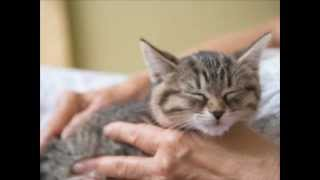 Cat Purring Sound Effect!