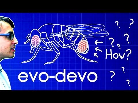 Evo-Devo (Despacito Biology Parody) | A Capella Science - YouTube