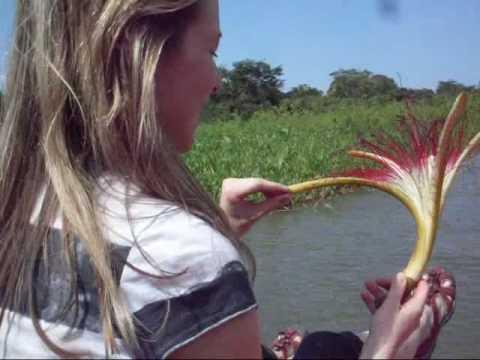 MIRADOR ADVENTURES: Rio San Juan (Costa Rica-Nicaragua)