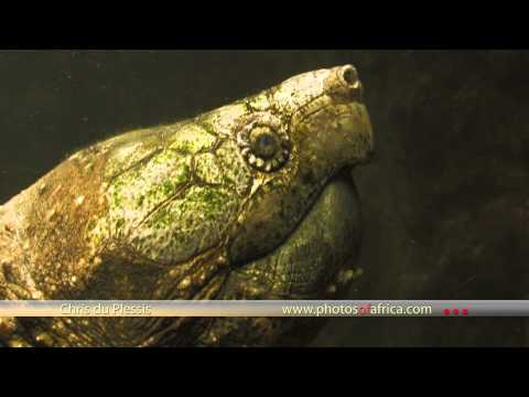 Swadini Reptile Park – Khamai Reptile Centre – South Africa Travel Channel 24