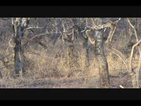 Randy Nyala – Diekie Muller Hunting Safaris Bow Hunting South Africa