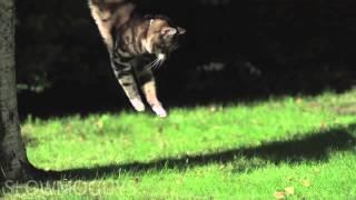FIRMLY FROZEN  - Noizepunk and BorisLove, Cello Lounge Vol. 1