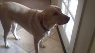 My Dog Tucker