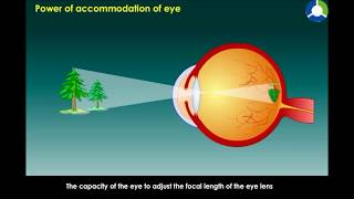 Power Accommodation of Eye