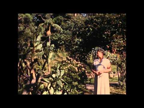 Ir A.W.vd Poel in  Zuid-Afrika – 1958 – afwisselende beelden.mpg