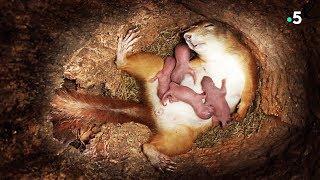 Naissance de bébés écureuils en direct - ZAPPING SAUVAGE width=