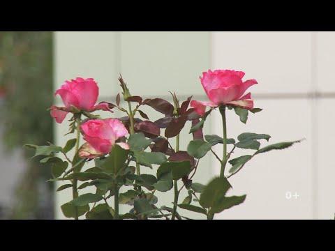 В Николо-Березовке пройдет праздник цветов