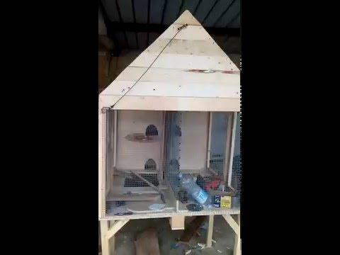 Come costruire una conigliera fai da te mania for Conigliera da interno
