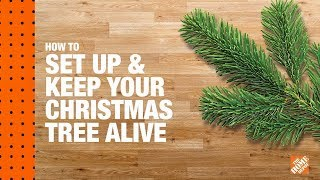 How to Care for a Living Christmas Tree
