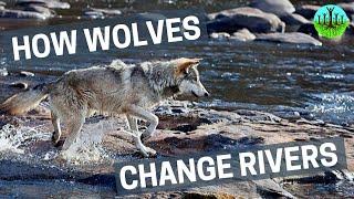 Hoe wolven de natuur veranderen!