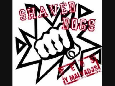Solo Queda Recordar de Shaved Dogs Letra y Video