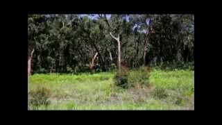 HARLEJ - Dětský hřiště VIDEO