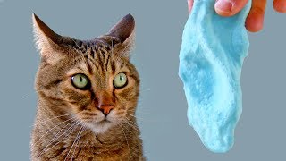 Funny Cat Reacts To Slime - WILL IT LIKE SLIME ??