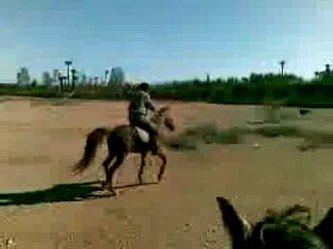 BOOK CAMEL RIDING TOURS IN MARRAKECH MOROCCO WWW.MARRAKECH-.mp4