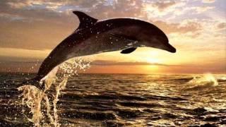 Delfins - O Vento Mudou (1984)
