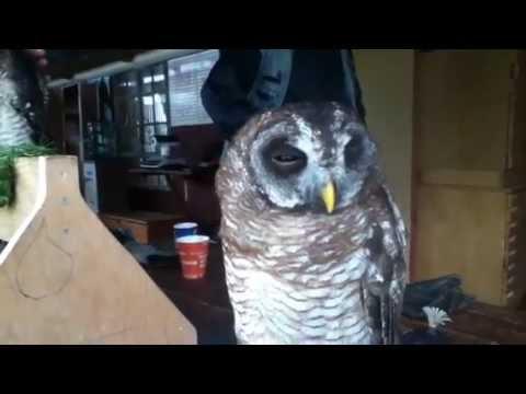 Petting Jack jack the Owl