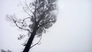 Nevoeiro - cota 400 mts - Serra de Sintra