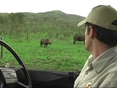 Rhinos everywhere